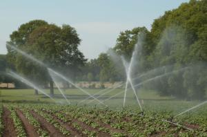 Cropirrigation